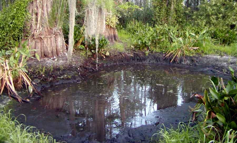 Big Cypress Swamp Story Gator Holes